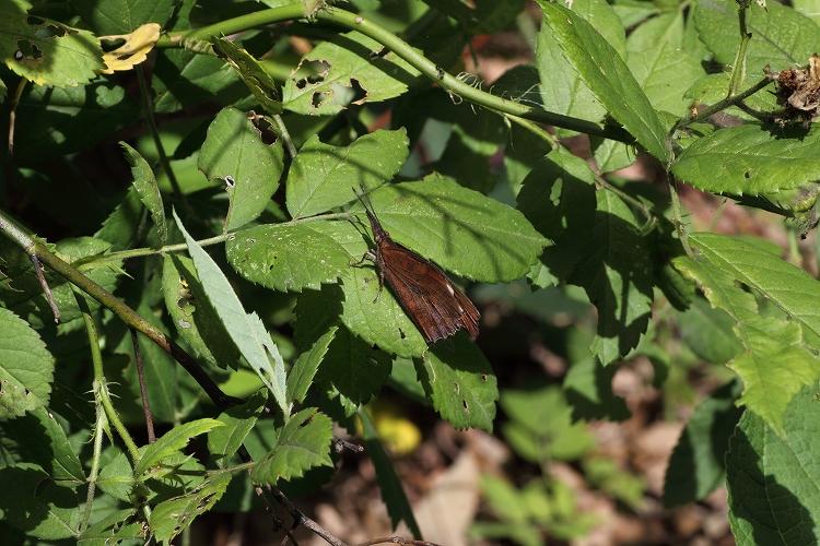 蟻マクロ02