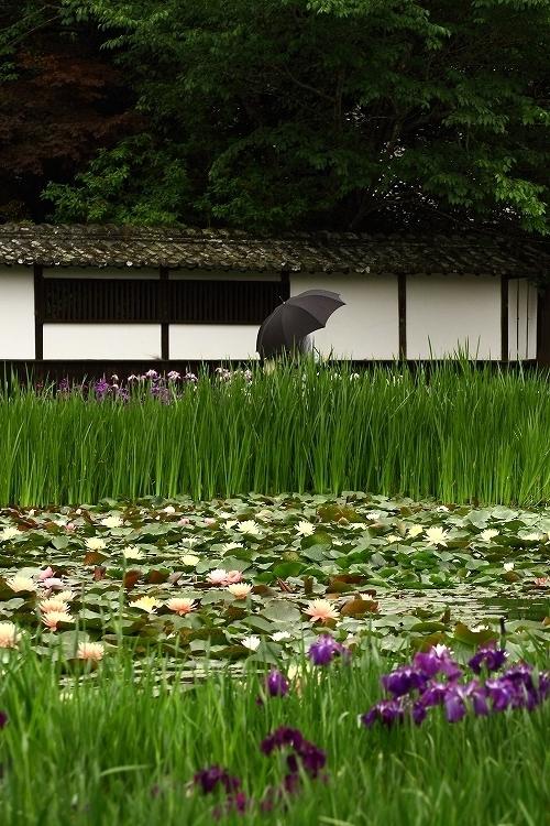 加茂花菖蒲園51