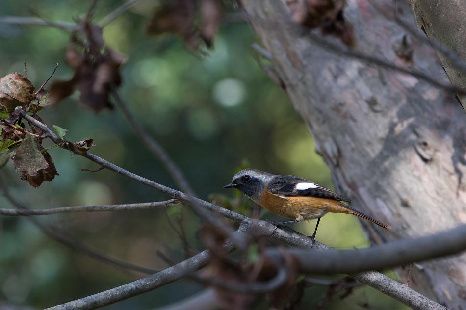 やっぱり野鳥撮影が好き-11