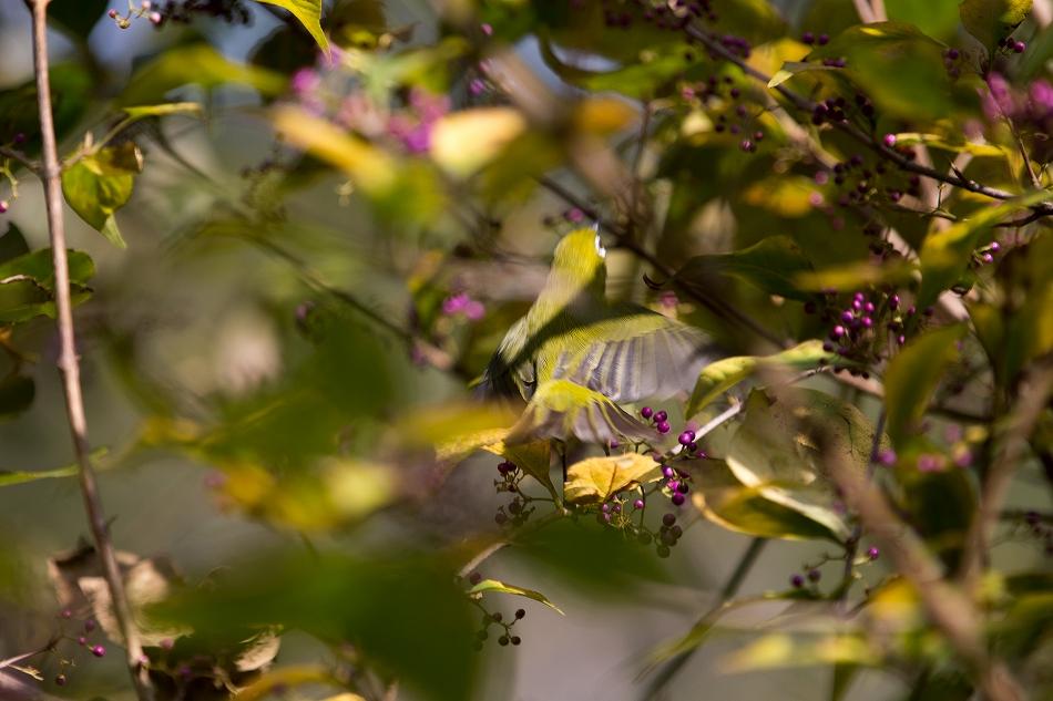やっぱり野鳥撮影が好き-4