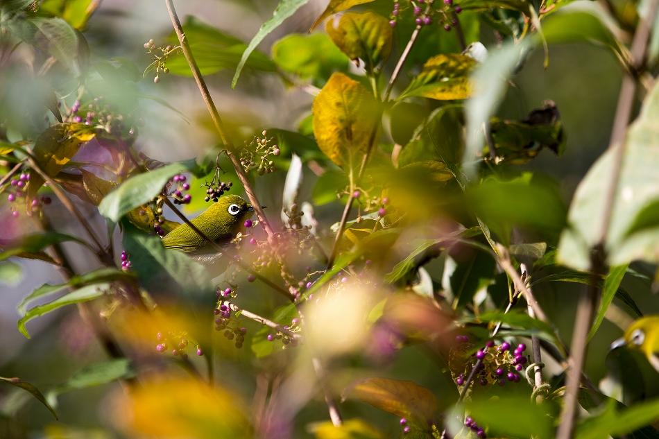 やっぱり野鳥撮影が好き-3