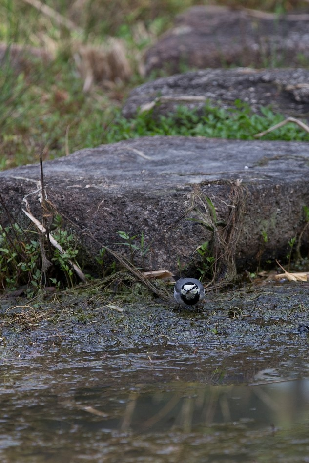 やっぱり野鳥撮影が好き-2