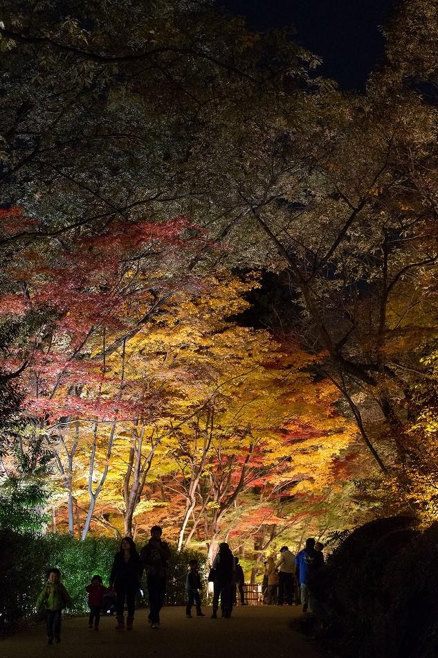東山ライトアップ-7