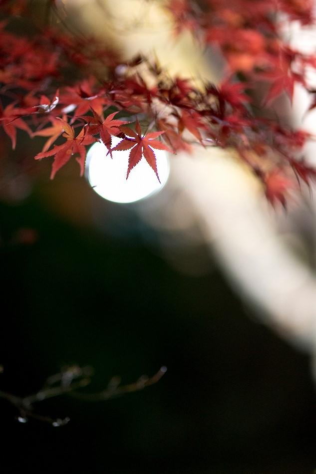 東山ライトアップ-2