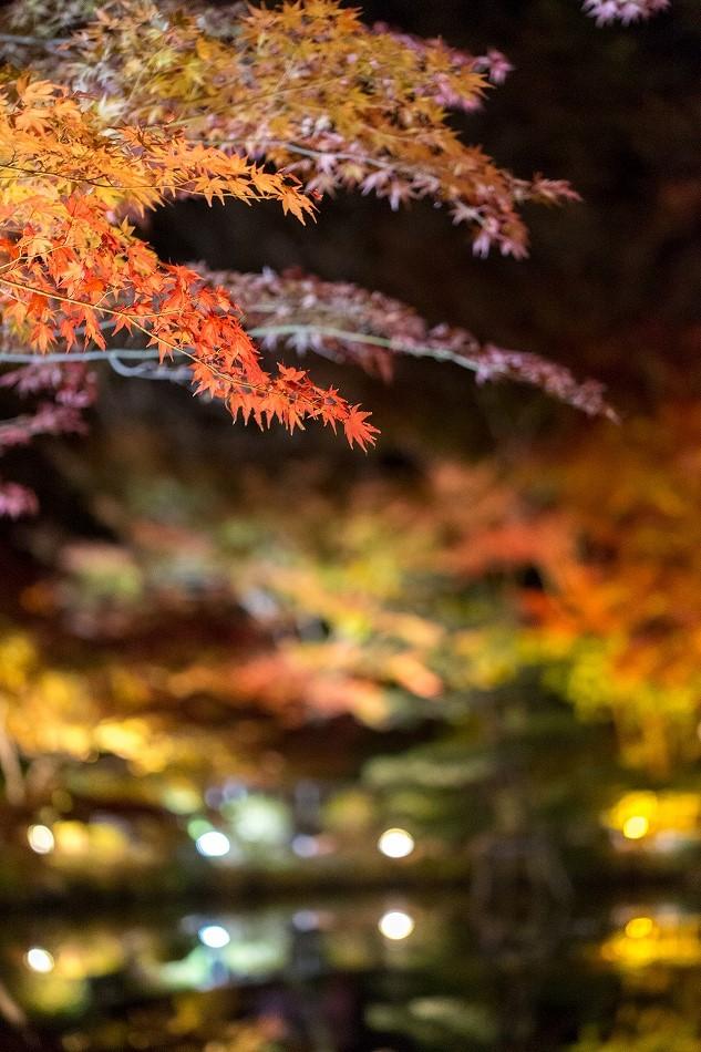 東山ライトアップ-22