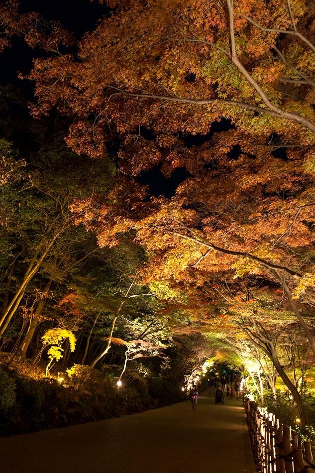 東山ライトアップ-63