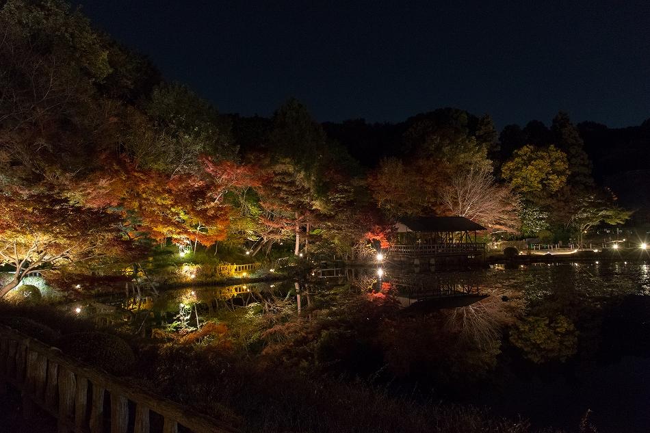 東山ライトアップ-58