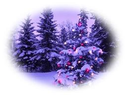 Christmas tree 2014 1