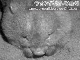 f01144(夜の寝顔)