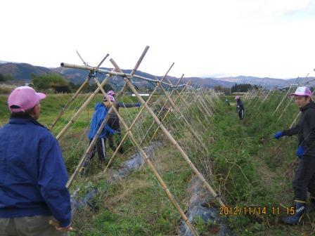 IMG_7391農園支援