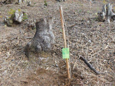 DSCF0137植樹11