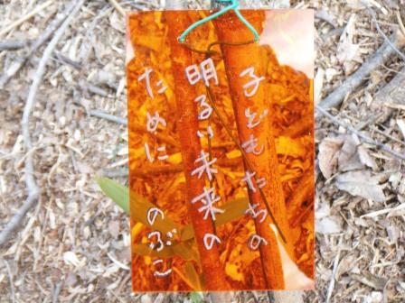 DSCF0138植樹2