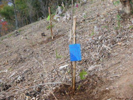 DSCF0141植樹33