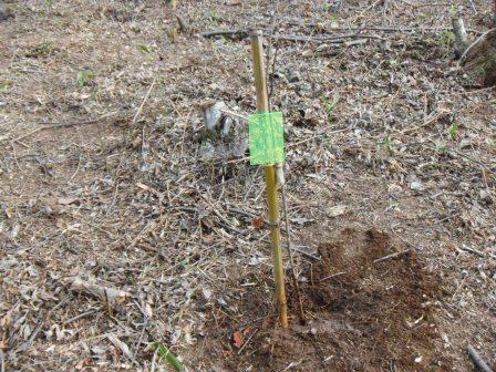 DSCF0143植樹44