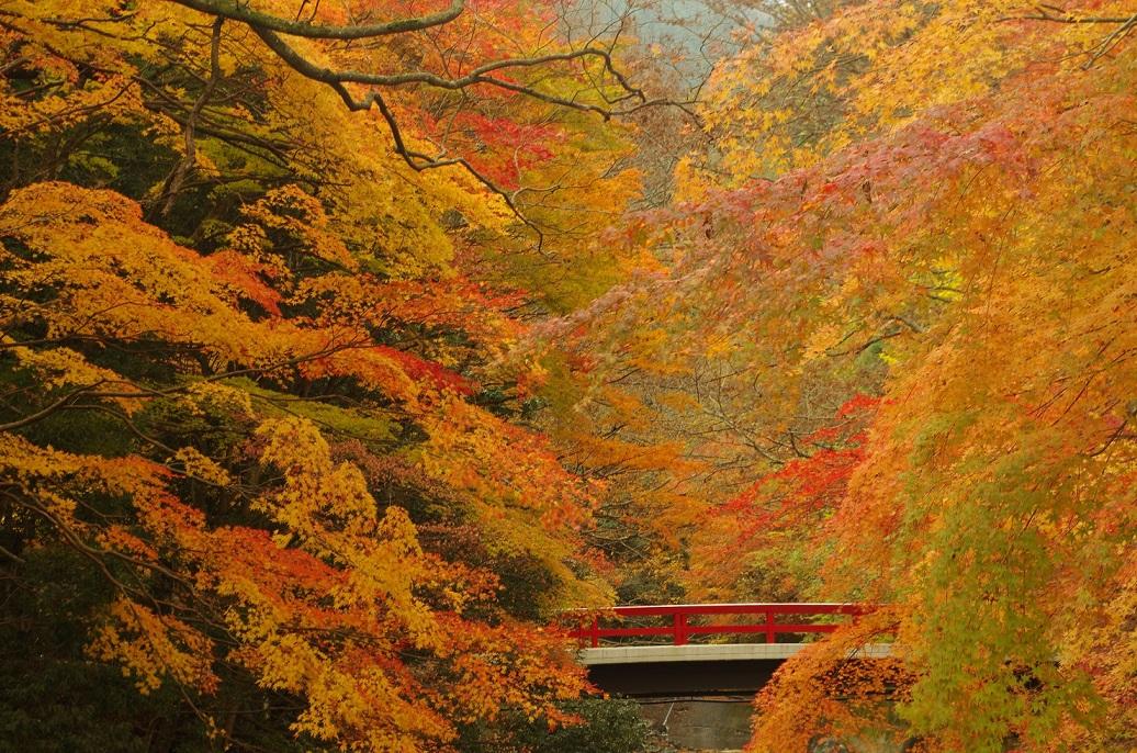 katsuragawa02.jpg
