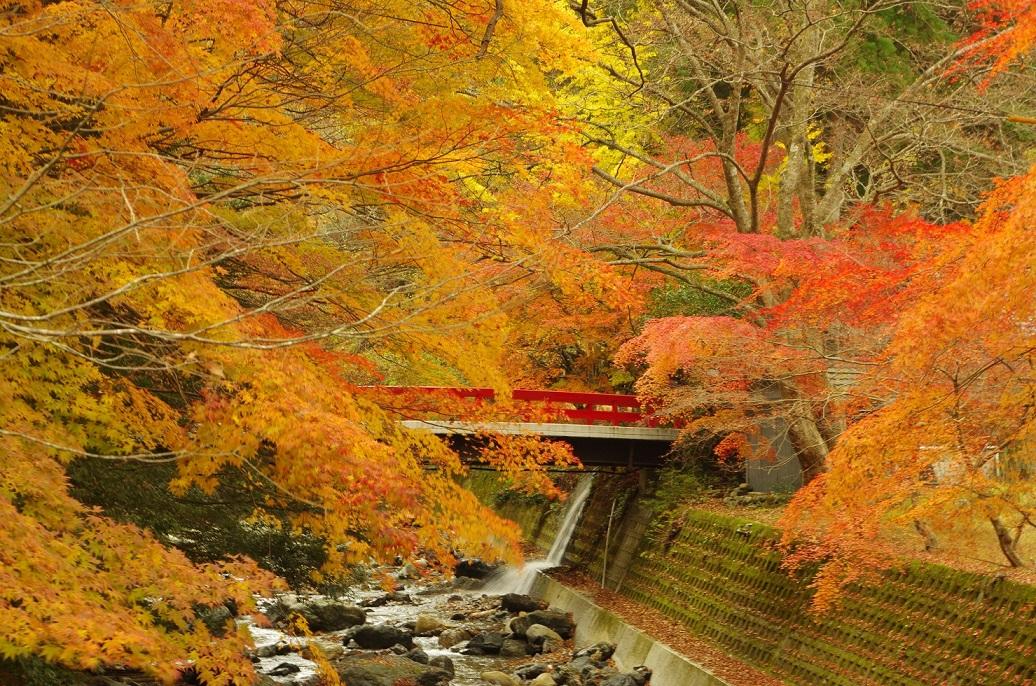 katsuragawa03.jpg