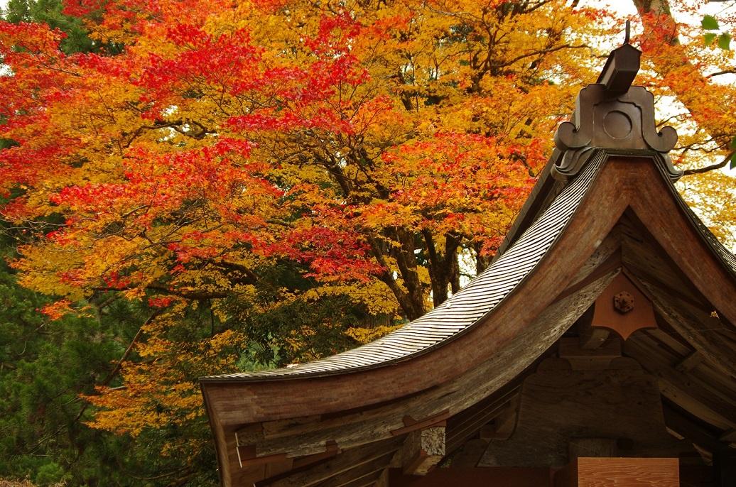 katsuragawa07.jpg