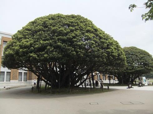 *迎賓館前のシンボルツリー*