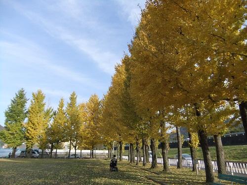 *黄色く染まった公園*