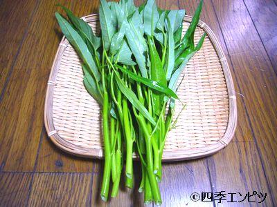 20110731 エンサイ 収穫