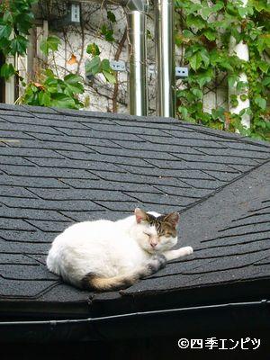 201110 六本木 神社猫 02