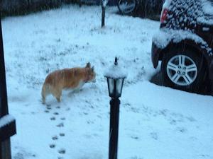 snow@20140208kagawa.jpg