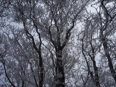 2013-02-03-018.jpg