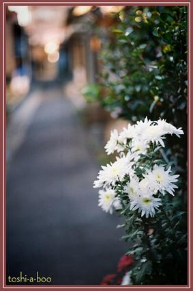 rozi.jpg