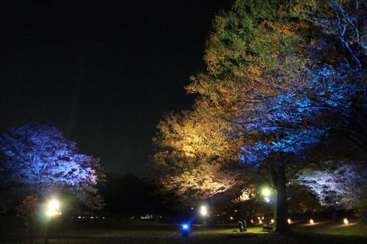 紅葉 信玄堤 ライトアップ 3