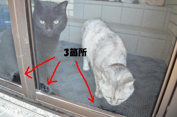10_convert_20120727191644.jpg