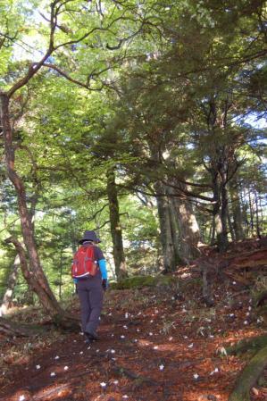 4高山への道