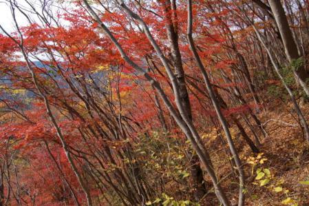 20尾根の紅葉