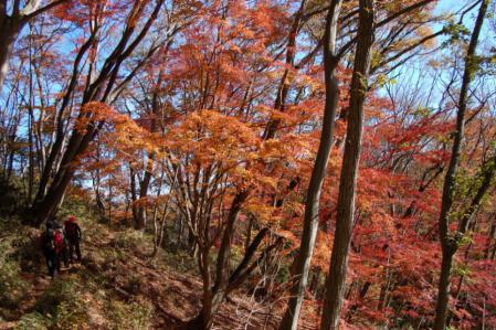 39上山ハイキングコース