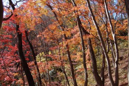 41上山ハイキングコース