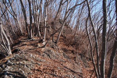 13白木山への尾根