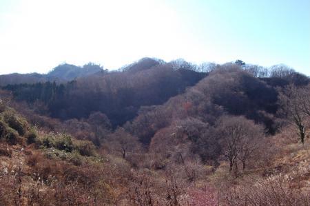 14白木山への尾根