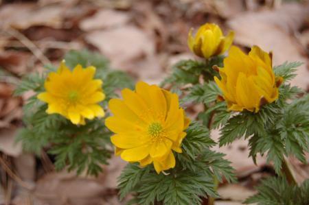 28花の森