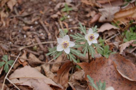 29花の森