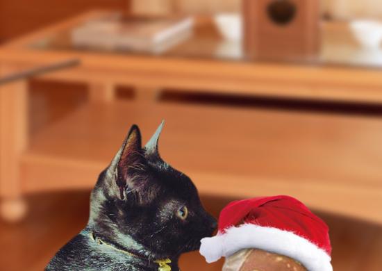 クリスマス準備16