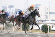 南関東競馬&中央競馬予想奮闘記 -エンプレス杯ニシノナースコール