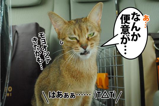 20120422_05.jpg