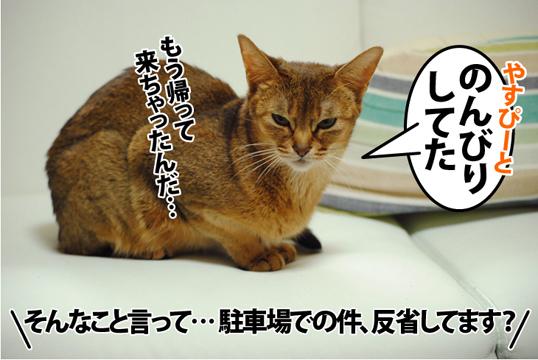 20120508_02.jpg