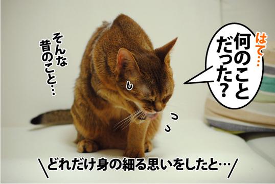 20120508_03.jpg