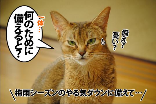 20120515_03.jpg