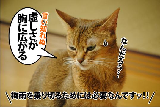 20120515_04.jpg