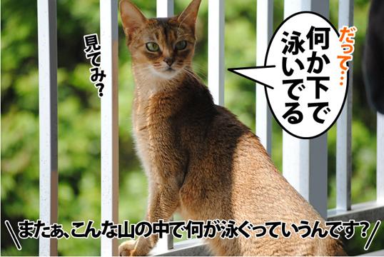 20120518_02.jpg