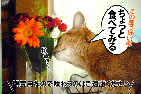 20120523_02.jpg