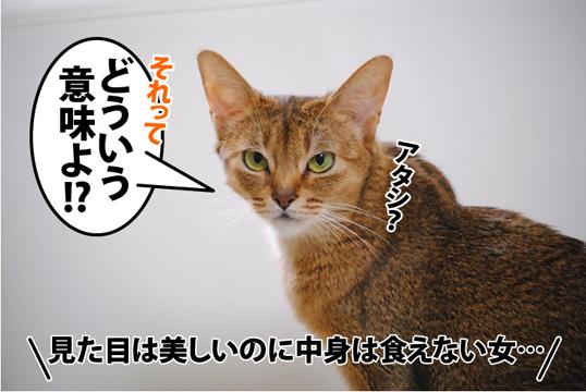 20120523_04.jpg
