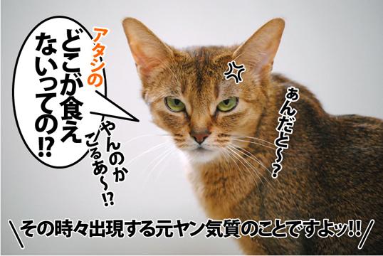 20120523_05.jpg