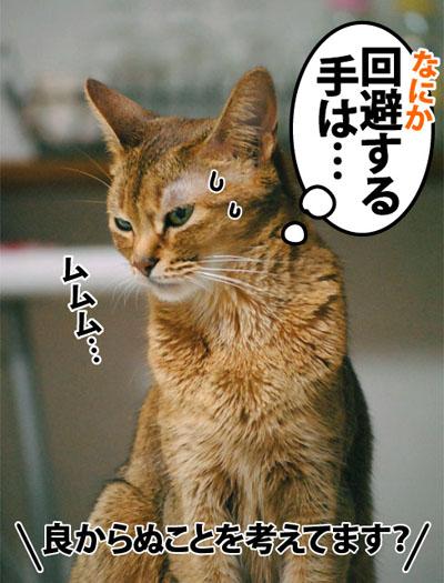 20120528_03.jpg